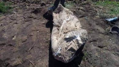 Ανεκτίμητο αρχαιολογικό θησαυρό ανακάλυψε Λαρισαίος αγρότης
