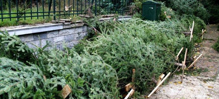 Πολύτιμο λίπασμα από τα χριστουγεννιάτικα δέντρα στο Δήμο Πυλαίας-Χορτιάτ