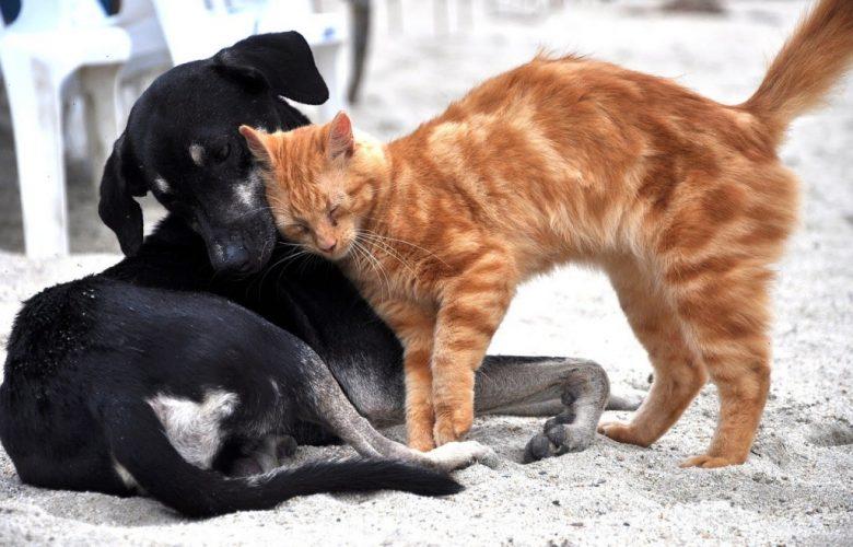 Φροντίζουμε τα αδέσποτα. Η βεβαίωσης μετακίνησης για τη σίτιση των αδέσποτων ζώων