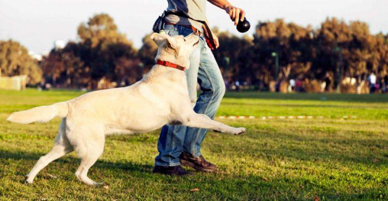Δήμος Αθηναίων: Δωρεάν τοποθέτηση microchip σε όλους τους σκύλους και τις γάτες