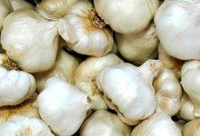 Ανοίγει η αγορά της Ιαπωνίας για το σκόρδο Πλατυκάμπου (vid)
