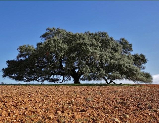 Ποια δέντρα συμβάλλουν στην καταπολέμησή της ατμοσφαιρικής ρύπανσης