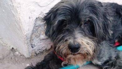 Ψαράδες έσωσαν σκυλάκι που κολυμπούσε στον Κορινθιακό Κόλπο