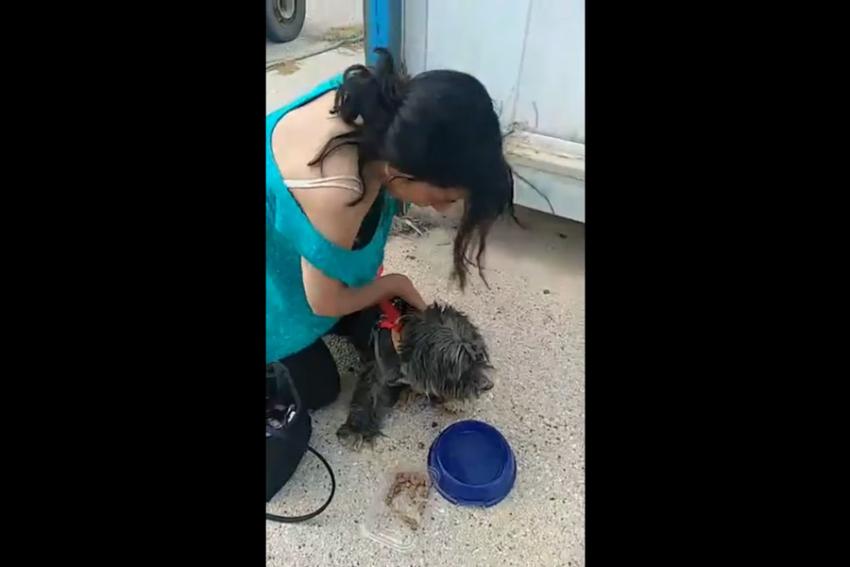 Ψαράδες έσωσαν σκυλάκι που κολυμπούσε επί 7 ώρες στον Κορινθιακό Κόλπο (vid)
