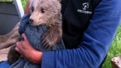Μικρό αρκουδάκι στην Καστοριά ελευθερώθηκε από συρματόπλεγμα