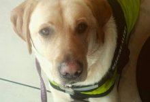Σκύλος φύλακας-άγγελος σώζει την ιδιοκτήτριά του από επιληπτική κρίση (βίντεο)