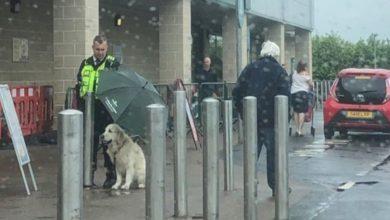Δεν φορούν όλοι οι ήρωες στολή! Φύλακας προστατεύει σκύλο από την βροχή(pic)