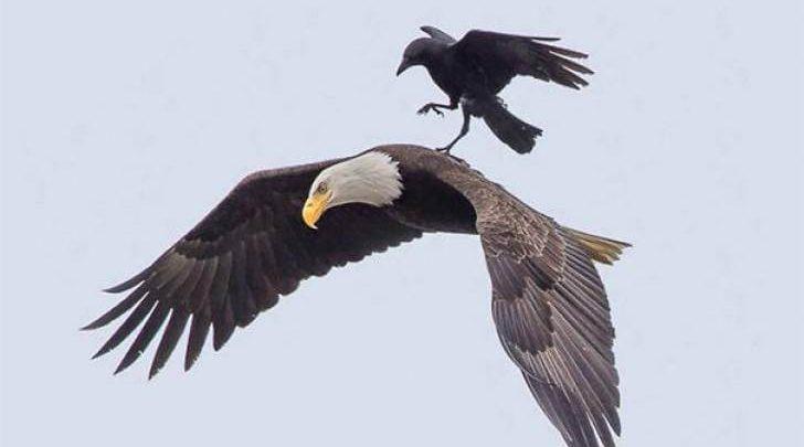 Σταμάτα να χάνεις χρόνο με κοράκια! Γίνε και συ αετός...