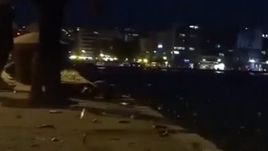 Δεκάδες ψάρια στην Θεσσαλονίκη βγήκαν μόνα τους στην στεριά (vid)